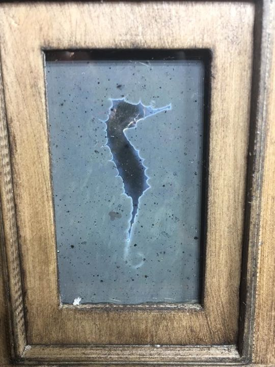 Seahorse photogram