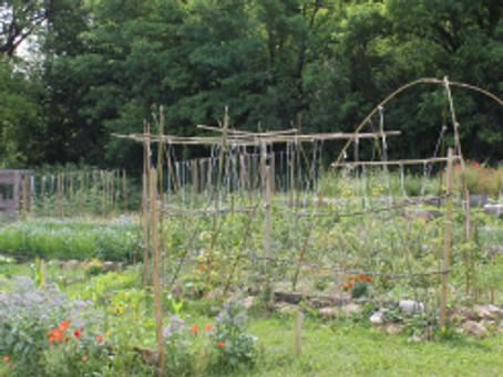 Mise en place du jardin de semences