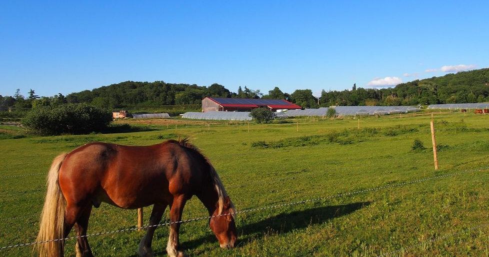 chevaux_2--e1504480765718-1024x539.jpg