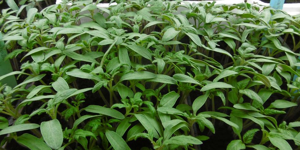 Vente de plantes à la Ferme des Volonteux