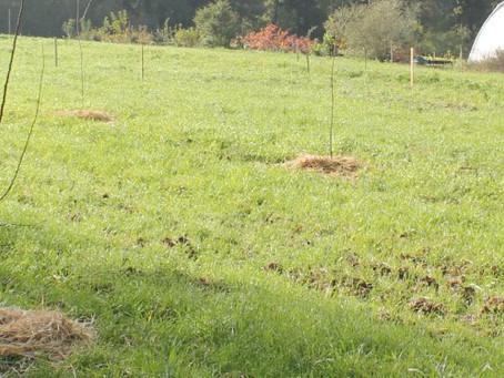 Plantation d'automne !