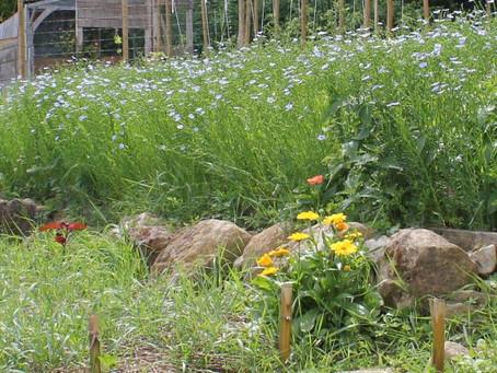 Premiers stages de création du jardin : Dès Juillet !!