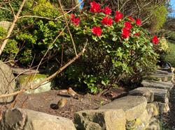 Joyful Garden