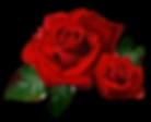 Rose 2 - Tehja Avanni Goddess Healing Sa