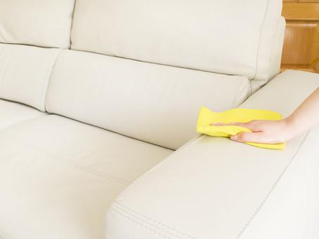 Cupim no sofá, saiba soluções caseiras para acabar de vez com essa praga.