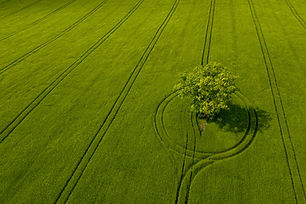 aerial-view-of-lonely-tree-in-a-green-fi