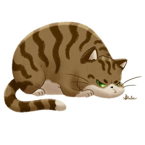 Chubby Grumpy Kitty (Tabby)