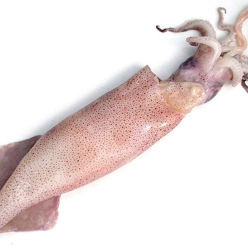Calamaro pescato fresco per frittura o ripieno - Qualità Superiore