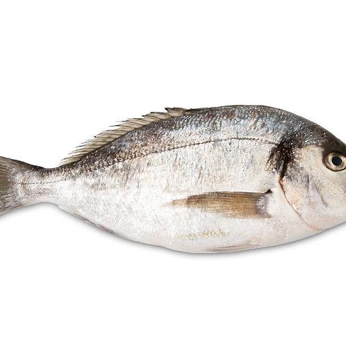 Orata pescata a mare 600 - 900gr