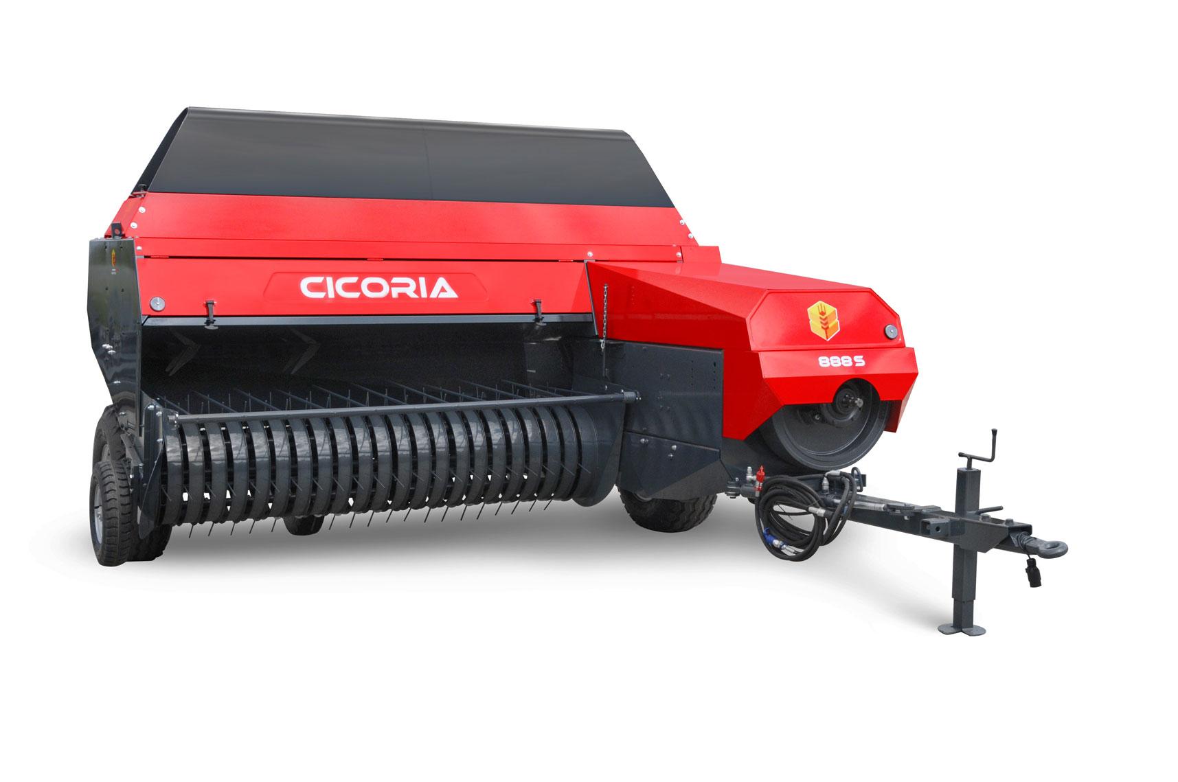 Cicoria 888 S