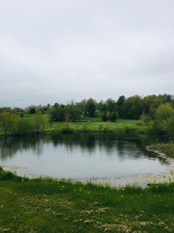 Pond by hole 11