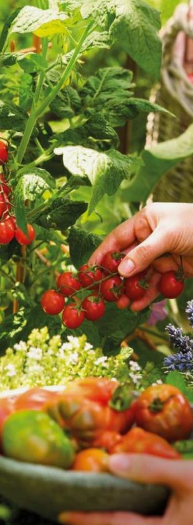 Agrotóxicos e o risco para nossa saúde