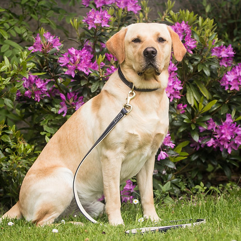 Dapple Navy & Cream Leather Dog Lead