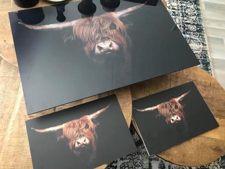 Schotse hooglander foto