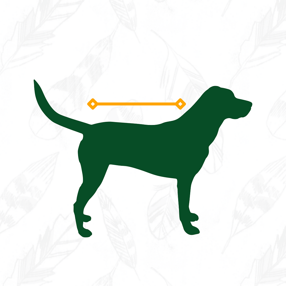 Measure your dog from the base of neck to the base of tail