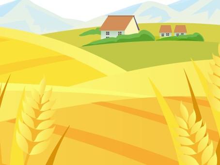 What is Regenerative, Organic Grain?