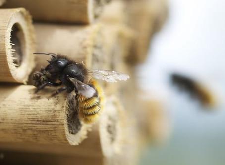 BEE-KIND