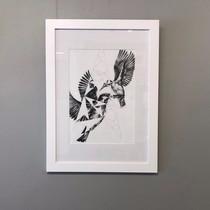 Swift Kingfishers