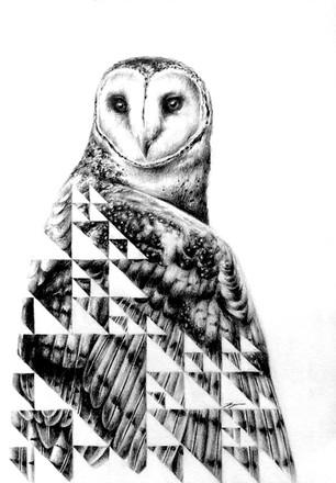 Sierpinski and the Owl