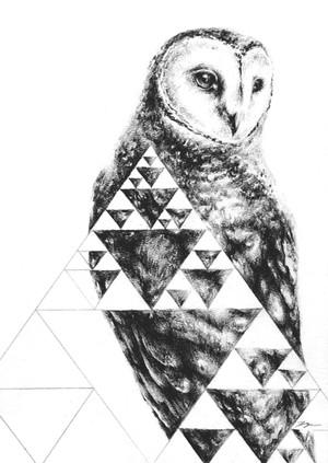 Owl Geometry