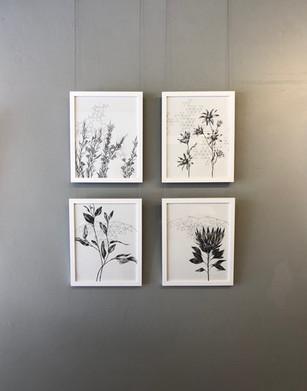 Framed Series of Fractal Botanicals