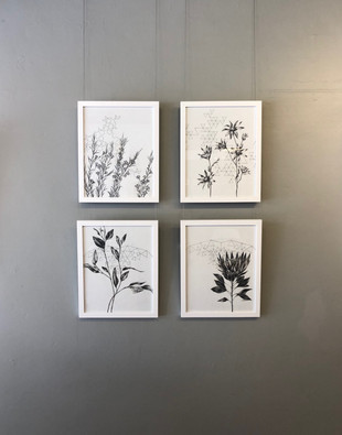 Framed Series of Fractal Botanicals