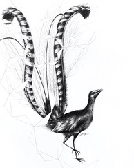 Lyre Bird and Feather