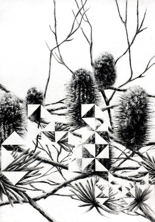 Dragon Amongst the Banksias