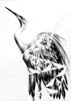 Egret Geometry