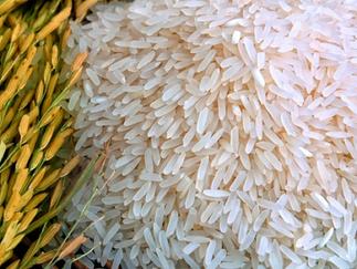 Preço do arroz sobe, acompanhando alta do dólar e de Chicago