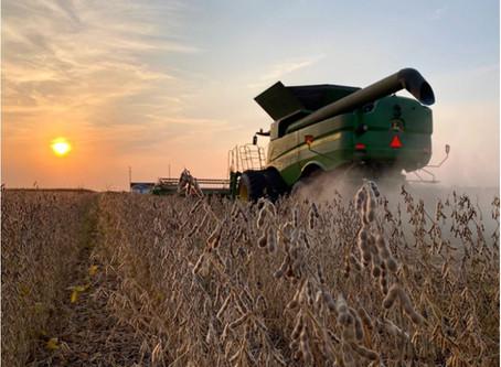 Soja: a colheita nos Estados Unidos