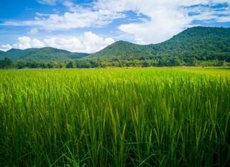 Importação de arroz pelo Brasil dispara no acumulado de setembro