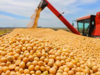 Soja: USDA reporta vendas acima do esperado pelo mercado