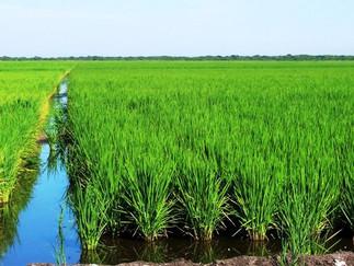 Alfredo Lago: os arrozeiros uruguaios aspiram a um bom ano produtivo