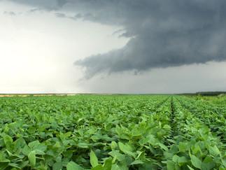 Soja Brasil: chuvas persistem no Sul e tempo seco no Nordeste e Centro-Oeste
