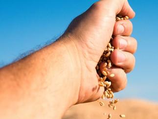 Oferta e demanda internacionais de grãos coloca mercado em alerta