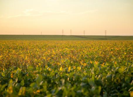 Recorde na soja: mais de 46% da safra 2020/21 foi vendida
