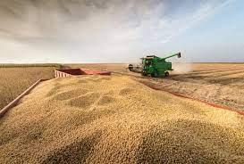 Colheita da soja atinge 80% da área no RS