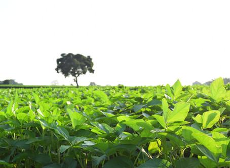 Exportações brasileiras de soja para a China atingem mínima