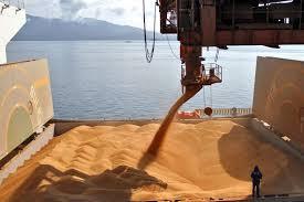 O que esperar das exportações brasileiras de arroz depois do melhor resultado em nove anos
