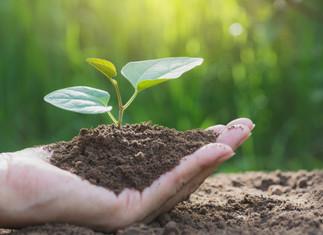 Agricultura: Valor Bruto da Produção deve ser 10% maior em 2020