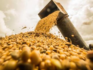 USDA reduz previsão para safra de soja dos EUA e eleva a do Brasil