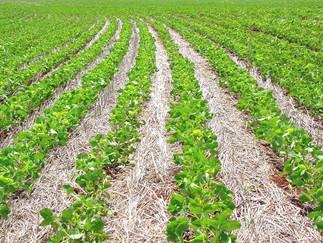 Datagro vê salto de 3% na área plantada de soja na safra 2020/21 do Brasil e produção recorde