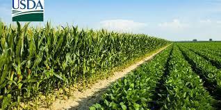USDA reduz índice de lavouras de soja em boas/excelentes condições; mantém no milho