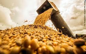 Abiove eleva estimativas de oferta, exportação e processamento de soja do Brasil