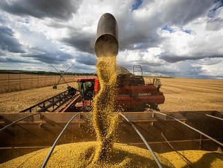 Soja:Chicago começa semana estável e mercado brasileiro focado na colheita e cumprimento de contrato