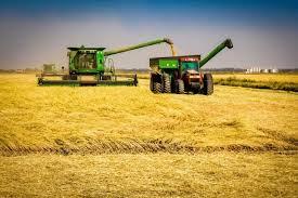 Colheita anual do arroz produzido sem defensivos agrícolas na UFSM teve aumento na produtividade