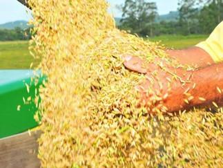Pedido por mudança em regra de financiamento para estocar arroz