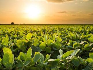 Anec reduz projeção de exportação de soja do Brasil em julho