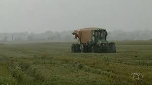 Arroz: retorno da chuva diminuiu ritmo de colheita em boa parte do RS